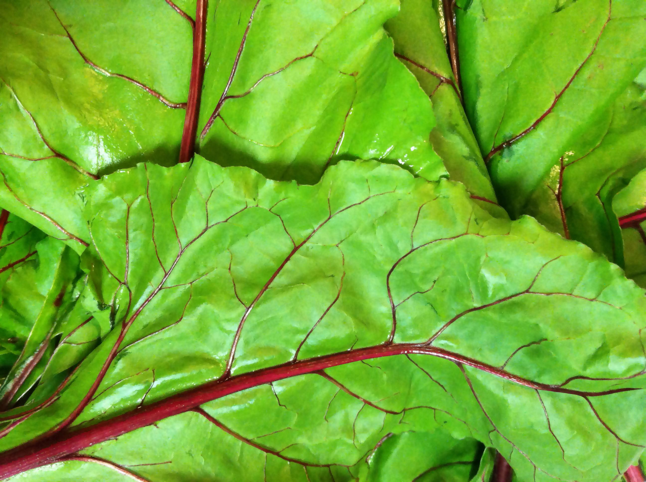 green beet leaves